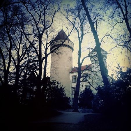 Konopis Castle Baroko Trees nature photo instaphoto tagsforlikes czechrepublic sky nice