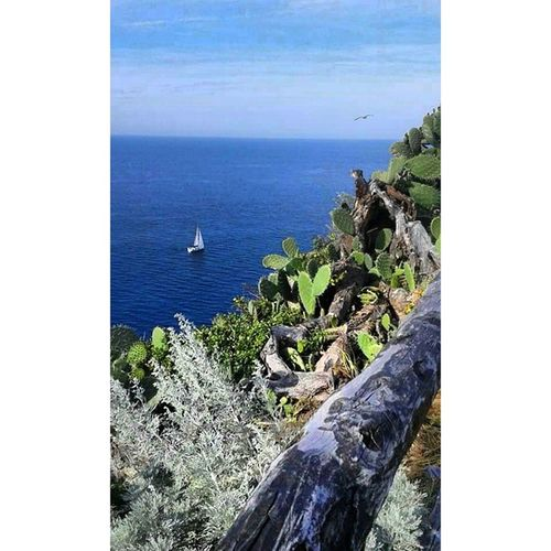 Prospettive di libertà. Freedom. Spring Milazzo Promontorio Freedom Free Capo Sea Boat Seagull Bluesea Splif Green Pic Life Makeyourmove Photoofday Joint Follow Landscape TakeAPhoto Made Lfl Nofilter Nocrop Nature fotogrammi naturelovers nocrop maggio perspective life relax