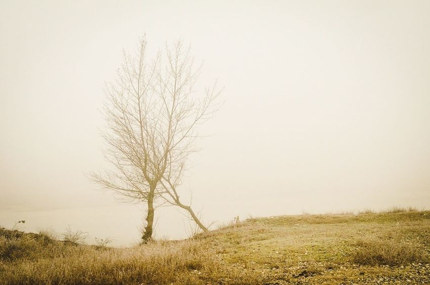 Another Tree with friend in the fog... Hagging A Tree Beauty In Nature Nature Photography Landscape