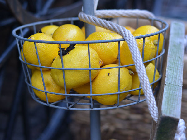 Yellow lemons in a basket - outdoor find Rope Basket Close-up Day Food Freshness Fruit Large Group Of Objects Lemon Lemons Lemons In A Basket Multiple Items No People Outdoors Yellow Yellow Lemons