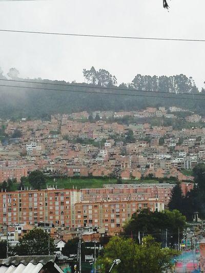 Creo haber visto un lindo gatico... 🤔🤔🤔🤔 Cat In The Mountain. Mountains Bogota,colombia.