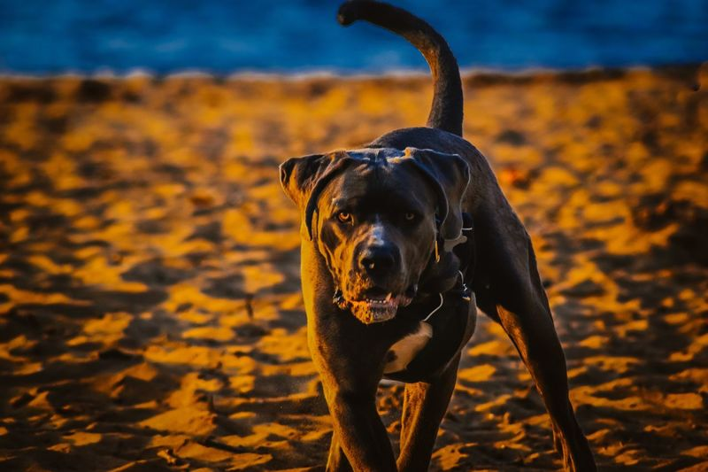 I've seen you One Animal Canine Mammal Dog Animal Themes Animal The Great Outdoors - 2019 EyeEm Awards Domestic Pets Domestic Animals Vertebrate No People Focus On Foreground Black Color Nature Sunlight Day Outdoors Land Leash Shadow