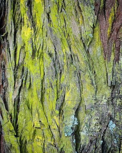 Wooden_hue Bark Tree Pocket_trees Natureromantix Tt_rt_nature Rebelsunited_nature Birds_bees_flowers_n_trees Rsa_nature Rsa_trees Global_nature_greens_december Universalviews Ig_masterpiece