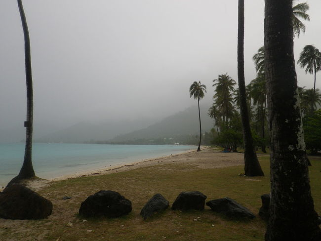 Beauty In Nature Day Fog Grass Landscape Moorea Mountain Nature No People Outdoors Scenics Sky Tranquil Scene Tranquility Tree Tree Trunk Water