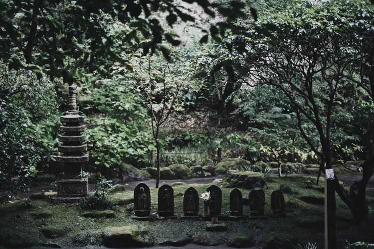 Snap VSCO Nature Japan Vscocam Light And Shadow Streetphotography Tree Plant Grave Cemetery No People Nature Growth