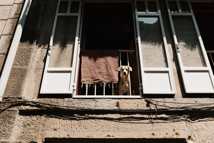 Threeweeksgalicia Window Mammal Animal Themes Domestic Animals Animal Pets Architecture Built Structure Domestic One Animal Building Exterior Day Building No People Vertebrate House Nature Outdoors Sunlight Low Angle View Dog