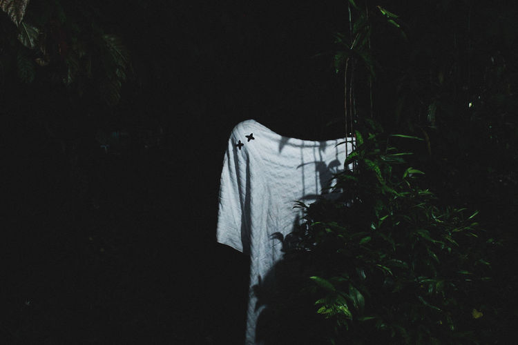 Close-up of clothes drying on plant at night