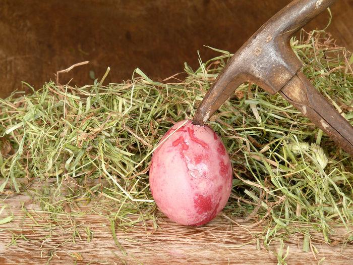 Beginnings Broken Brutal Close-up Creative Egg Ei EyeEm Best Shots Hammer Hammerfall Hammerhart Heu Hühnerei Kaputt Organic Ostern Osternest Subtil öffnen