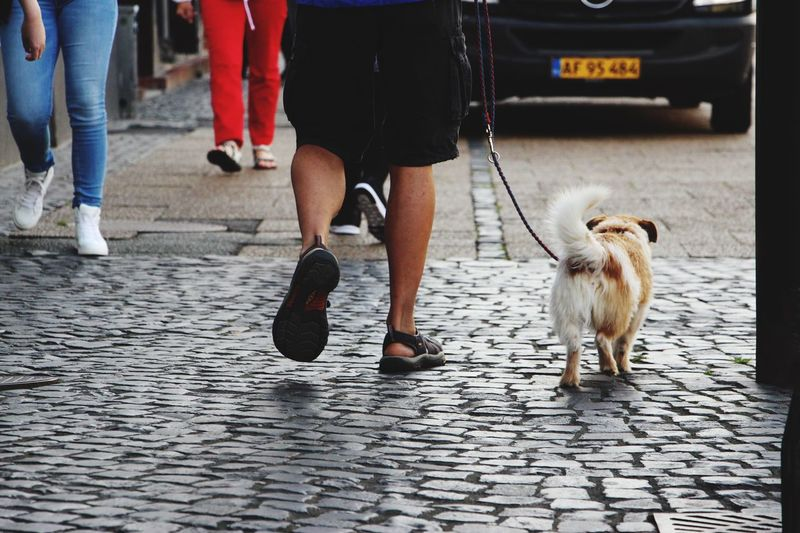 Dogs partnership... Template Background Dog Sweet Partners Partner Partnership Dogs Dogslife Dogs Of EyeEm Grey Street Streets Mein People Running Walking Around Walking Walking Around The City  Walking With My Dog Frog View Summer August Two Is Better Than One Pet Portraits A New Beginning