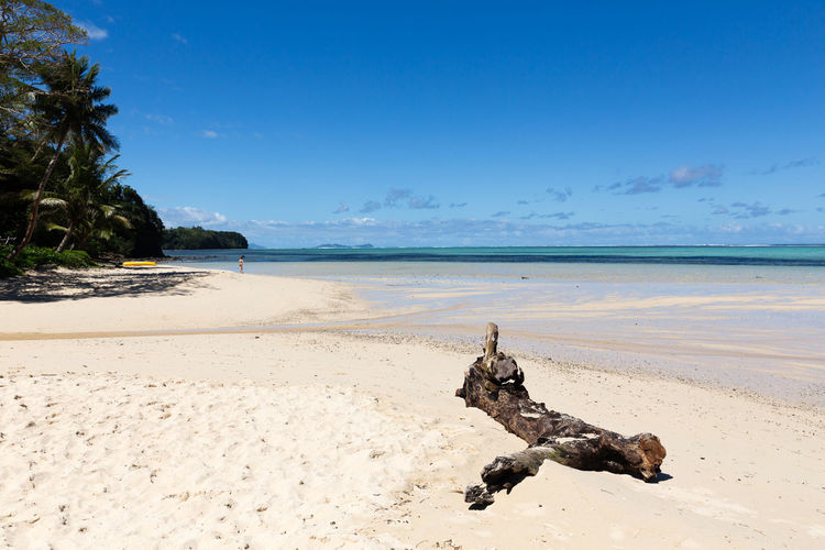 Water Beach Sea Sand Land Sky Scenics - Nature Horizon Over Water Horizon Beauty In Nature Nature Tranquility Tranquil Scene Blue Day No People Tree Idyllic Motion Driftwood Ocean Vacations Paradise Paradise Bach