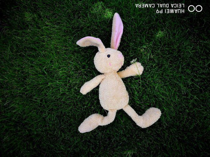 The Week On EyeEm 🐇 Rabbit 🐰заенька