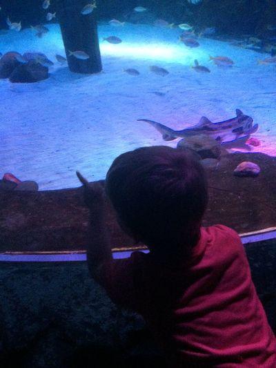 Fish Exploring Learning Aquarium