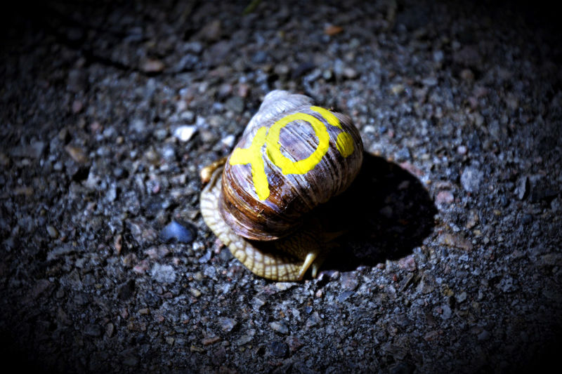 Greeting Snail Word Close-up In A Hurry  No People On The Move One Animal Outdoors Snail Yellow Color Yo! EyeEmNewHere The Week On EyeEm Paint The Town Yellow