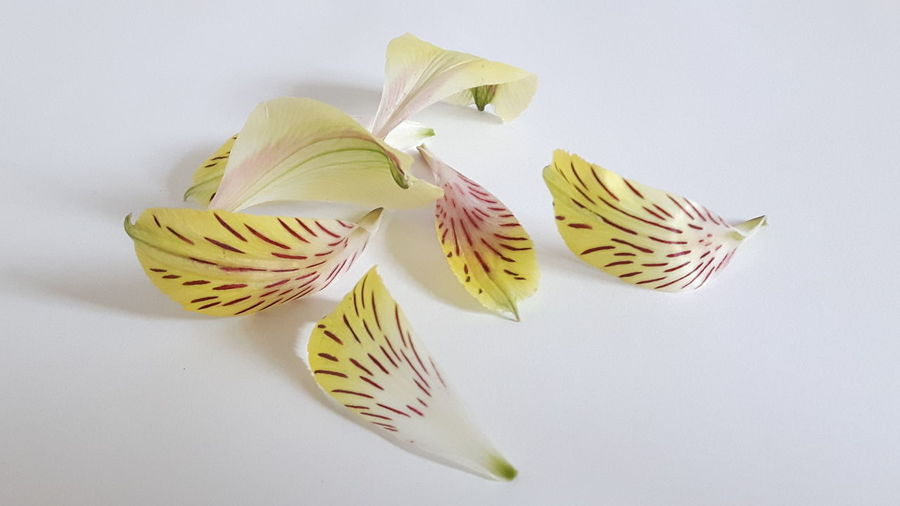 Hello petal 😆