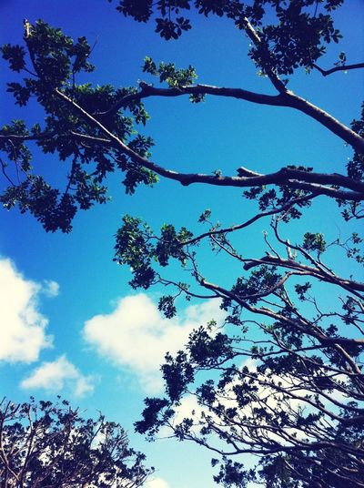 Blue Sky Okinawa