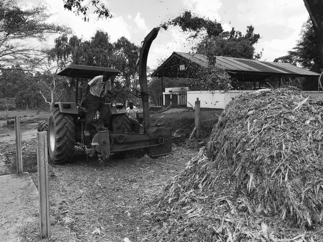 Black And White Friday Agriculture Tractor Maize Corn Outdoors Men People Sky Day Tree Working Farm Farm Life Fodder Maize