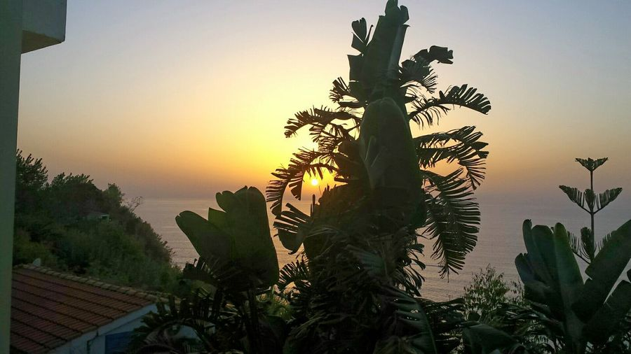South Of Italy Mediterranean Nature Calabria (Italy) Beautiful Nature Sunset Silhouettes Sunset Sunset_collection Learn & Shoot: Layering Banana Tree Palm Tree Beautiful View Sunset Sky Kalabrien Coconut Trees My Best Photo 2015
