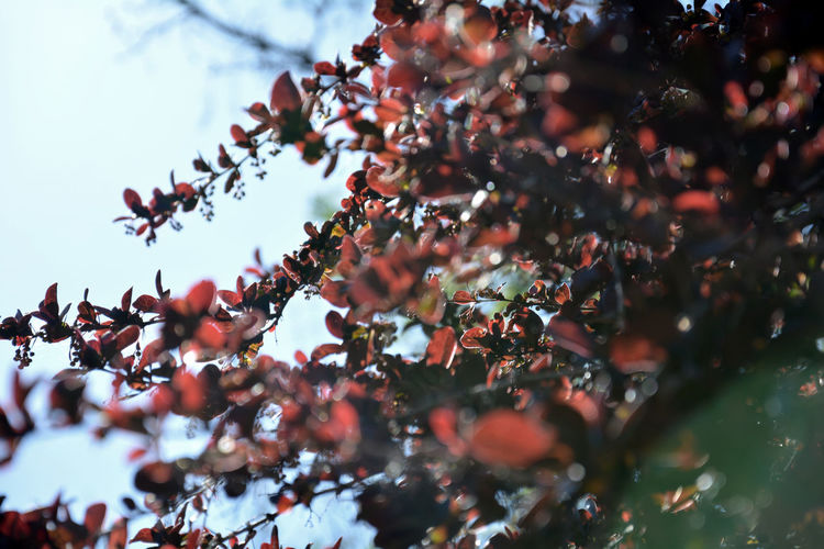 Autumn flowers 2 Tree Branch Winter Flower Pinaceae Pine Tree Defocused Sky Close-up Plant Blossom In Bloom Capture Tomorrow