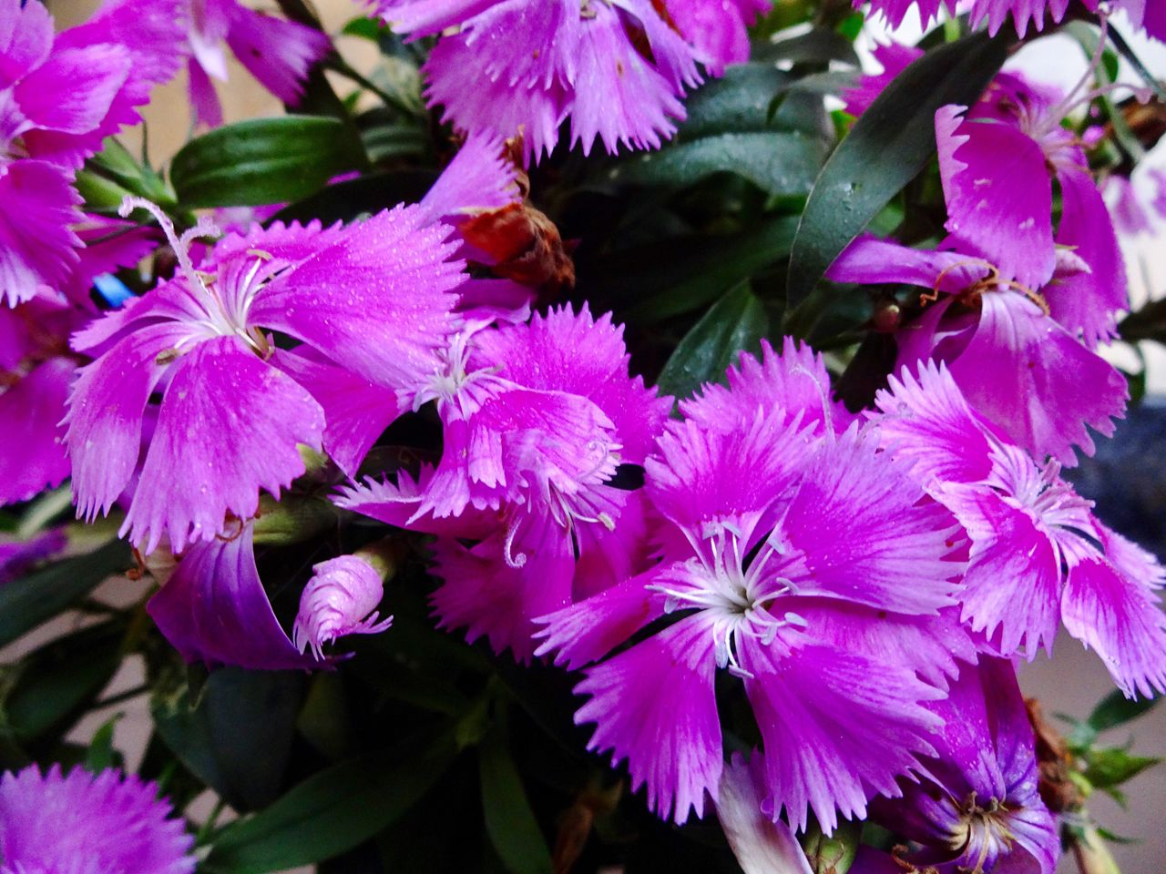 flower, growth, nature, petal, purple, beauty in nature, spring, no people, plant, outdoors, fragility, blooming, freshness, day, flower head, close-up