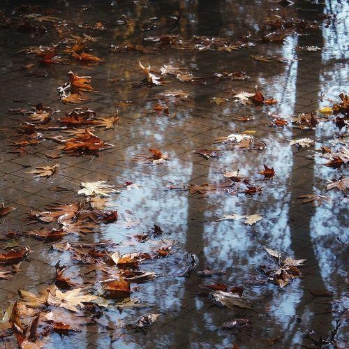 Crispyleaves🍂🍁🍂🍁🍂 Catherinetitian🍂🍁💛🎨 Photography By Me Fallingleafs🍂🍁💛 Forest Walk October2017🍂🍁💛 Autumn🍁🍁🍁 Leaf 🍂 Leaves 🍁 Autumn Nature Fall Season Fall Leaves Fall Colors Photography Calm Leafs Falling RedLeaves First Eyeem Photo Forest Fire Leaf Photography Leafseason Rainyday❤ Rainy Weather Autumnrain