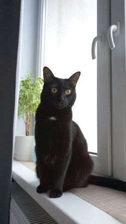Black Color Pets One Animal Animal Themes Looking At Camera Portrait Domestic Animals Domestic Cat Mammal Yellow Eyes Cats Of EyeEm BLackCat Close-up