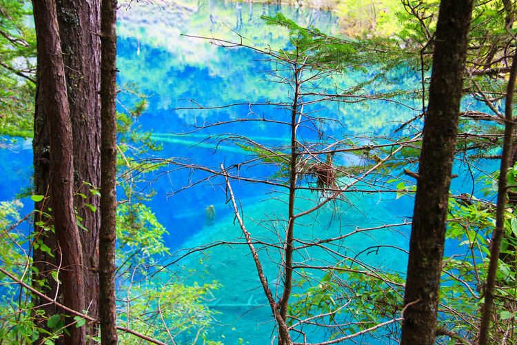Reflection Water Lake Turquoise Colored Outdoors Environment Branch Day Tranquility Tranquil Scene No People Beauty In Nature Blue Scenics - Nature Land Growth Nature Forest Trunk Tree Trunk Plant Tree Jiuzhaigou