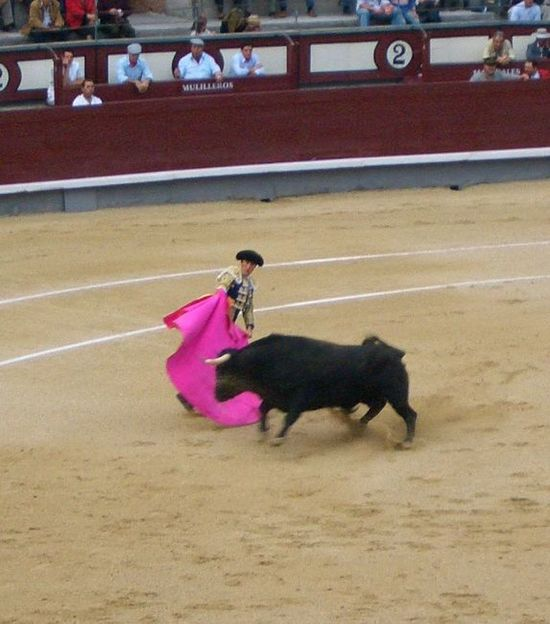 Yes, I took these pictures, gruesome as they are. I would not attend another bullfight. Bullfighting Arena Bullfights Bulls Madrid Spain Matador Rodeo Spanish Tradition Toreros Tourero