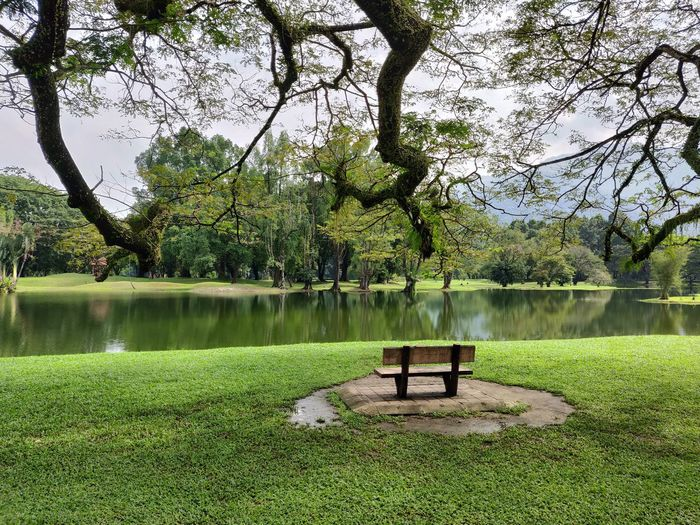 Empty Bench In Park By Lake
