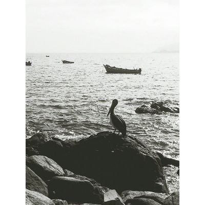 Pelicano Blackandwhite Beach CaletadeHornos Travel Ivregion vsco vscocam