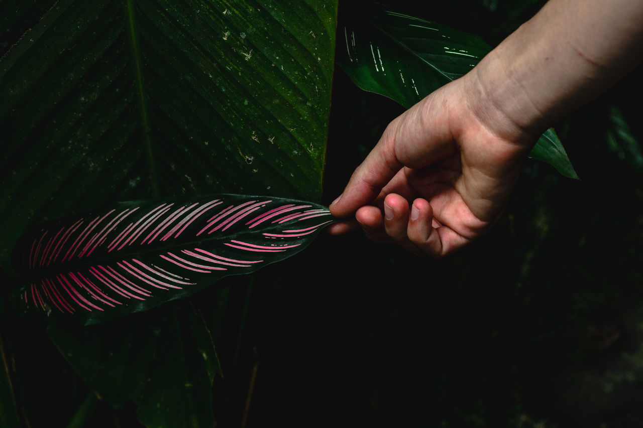 Cropped Hand Of Person Holding Plants