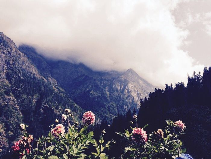 Clowdy Mountain Flowers Early Morning 3500m *_* 😍