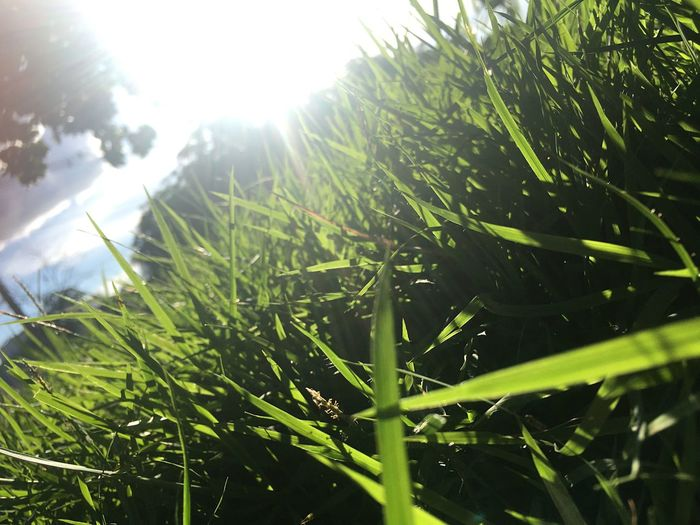 Sunlight Growth Grass Sunbeam Nature Lens Flare Field Day Green Color Sun Plant Beauty In Nature Sky Freshness