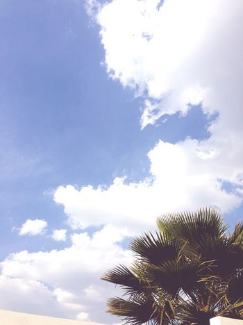 imagine Sky Cloud - Sky Low Angle View Growth Palm Tree Tree Nature Tranquility