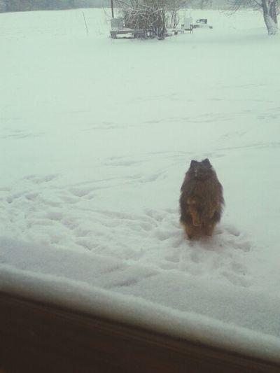 Dog Enjoying Life Snow Check This Out