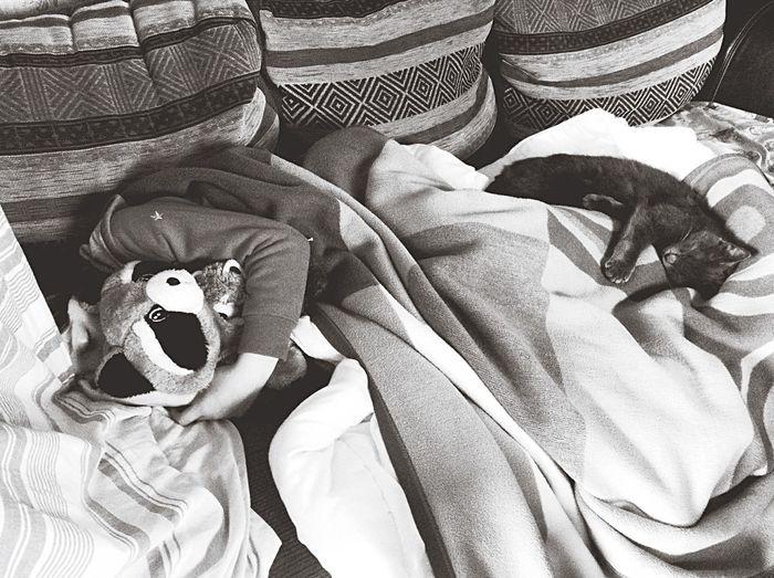 Cat Sister Love Sick