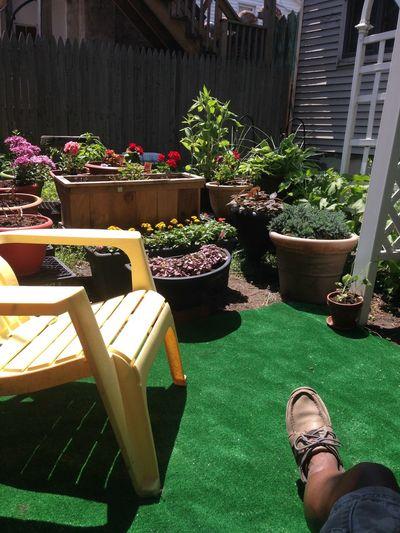Zen Garden 2015
