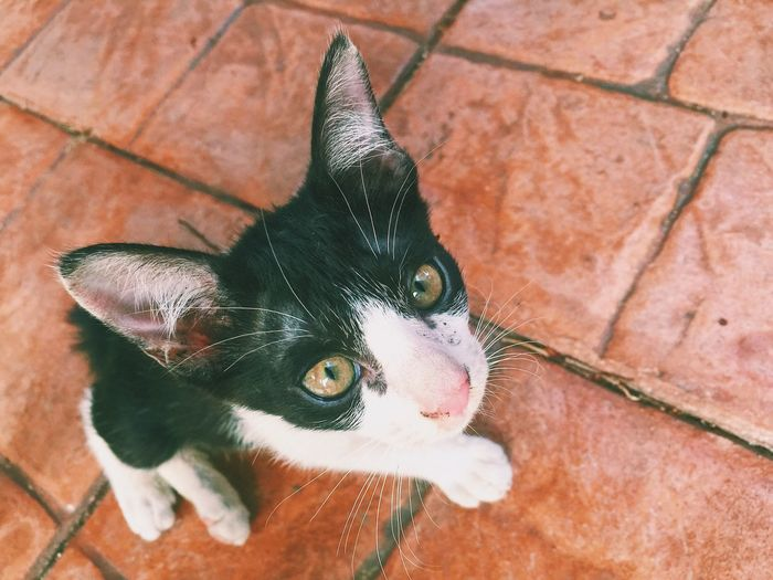 Domestic Cat Domestic Animals Pets One Animal High Angle View Feline Animal Themes Whisker Cat Outdoors Close-up EyeEmNewHere