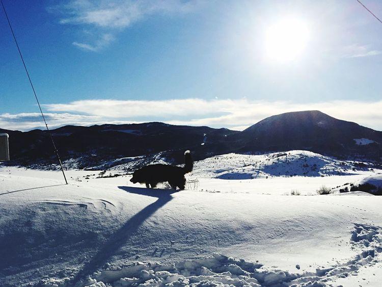Wonderfultime Baloo Snow Snow ❄ Hello World Lovemydog
