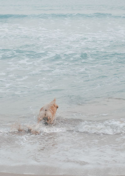 View of a dog in the sea