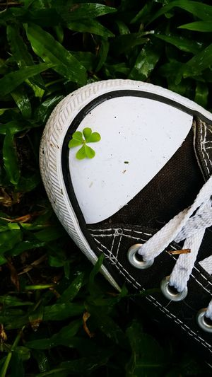 Leaf Plant Part Plant Green Color No People Communication Nature Day Outdoors Close-up Water High Angle View Sign Tree Growth Environment White Color Shape Land Clover