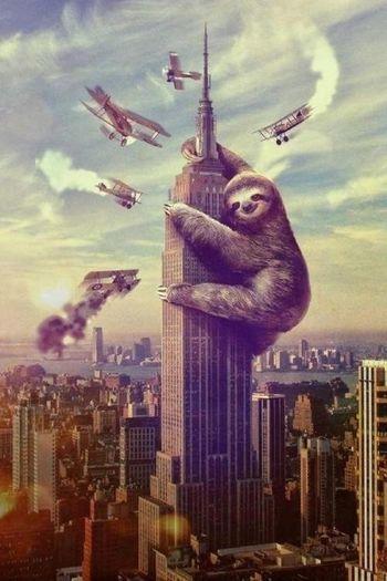 Slothing