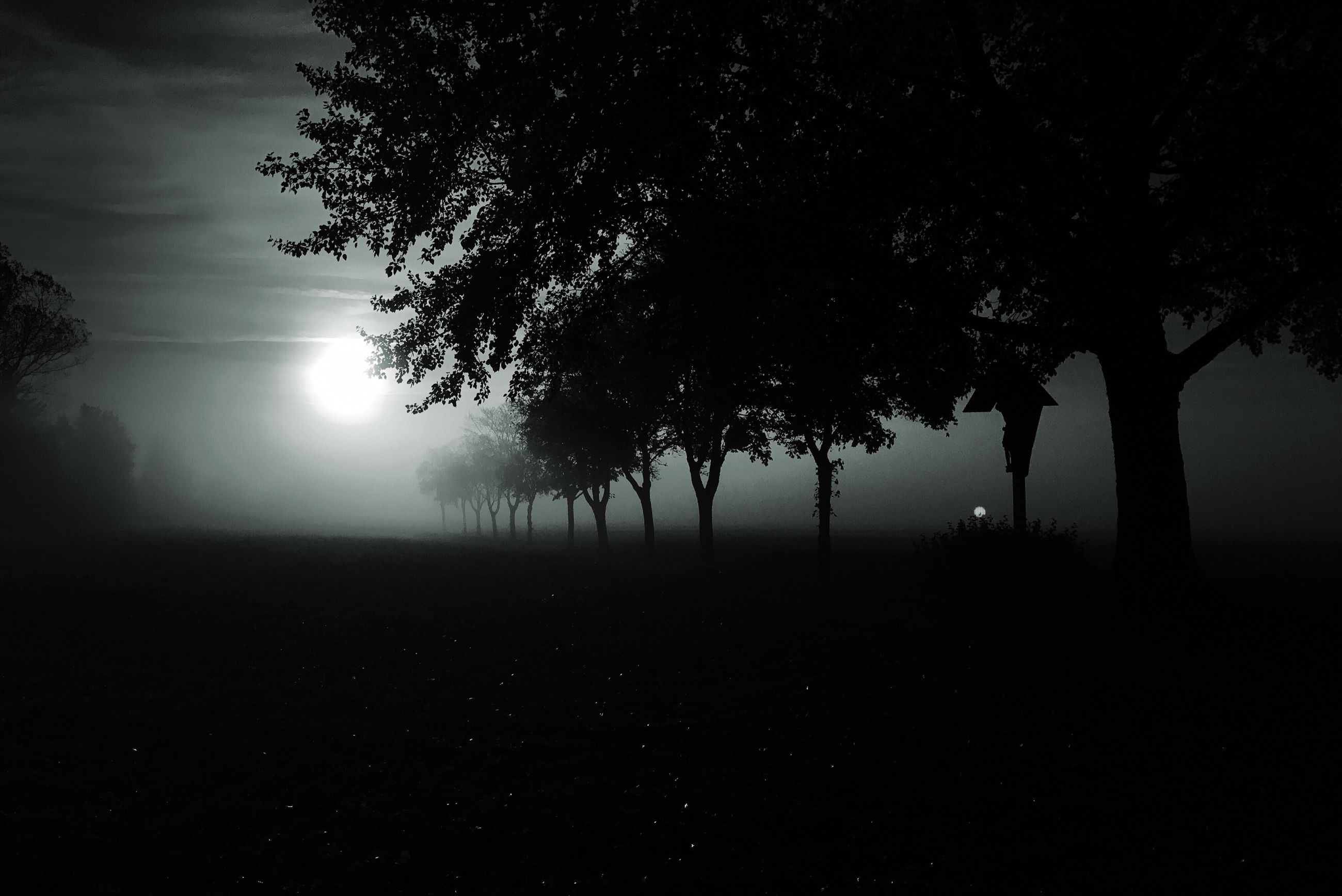 tree, nature, tranquility, tranquil scene, silhouette, beauty in nature, scenics, fog, idyllic, landscape, no people, sun, outdoors, sky, sunset, hazy, day