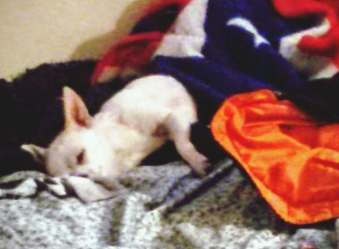 Ufo Roxannreyes75.com Chiwawa Puppy Chiwawa, Ufo Dog Chaser Ufo Dog Catcher Lazy Day Chihuahua Sleeping