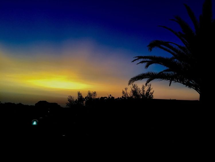 Silhouette Tree Sunset Beauty In Nature Nature Scenics Tranquility Tranquil Scene Sky No People Landscape Palm Tree Outdoors