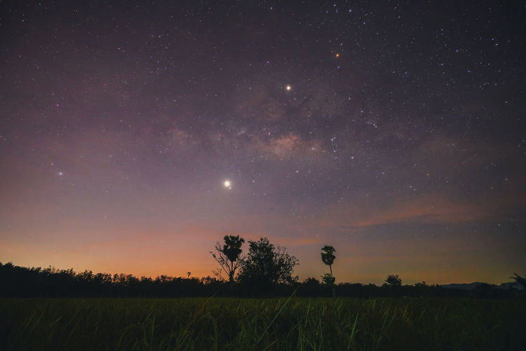 Milky way @Lansaka , Nakhon Si Thammarat, Thailand Milky Way Milkyway Night Sky Star - Space Space Stars Galaxy Plant Landscape Tree Beauty In Nature Rice Field