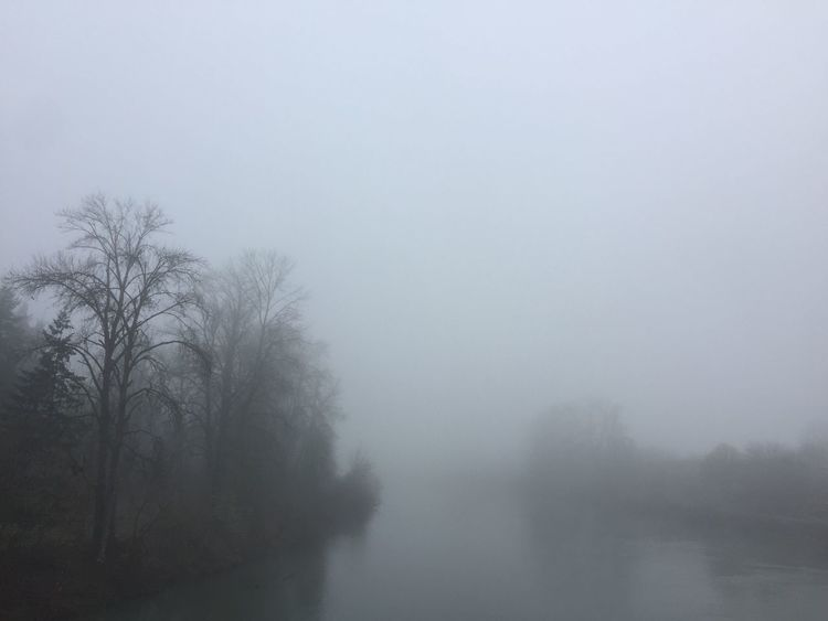 Foggy morning from the bridge south bank Willamette River  Bare Tree Bare Trees Beauty In Nature Day Fog Foggy Hazy  Landscape Mist Nature No People Outdoors Sky Tranquil Scene Tranquility Tree Water Weather