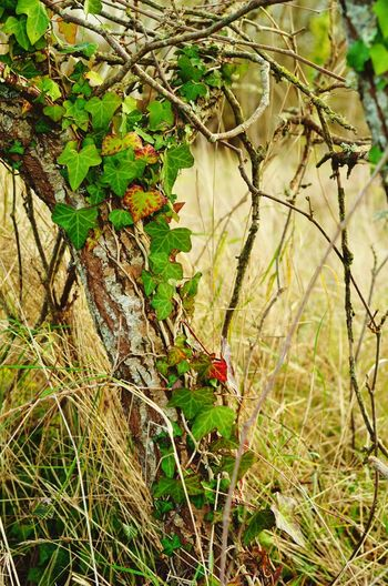 For The Love Of Trees ~ Febuaryphotochallenge Wildlife Photography Trees And Nature Trees Collection Leaf Welcome Febuary! Wildeyes Flowers, Nature And Beauty