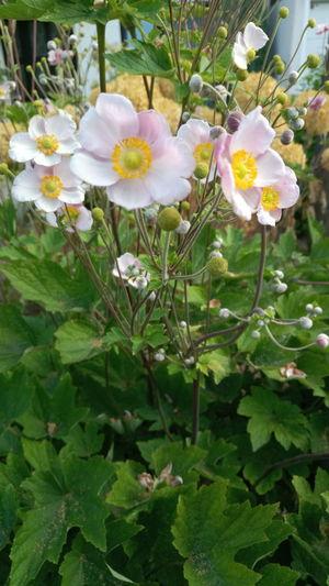 Blumen Flower