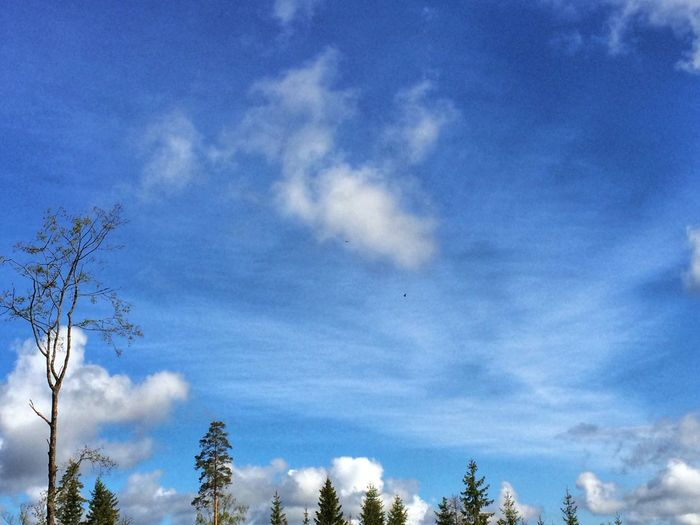 I saw two eagles circling above me in the forest earlier today when I was out on my morning run. Luckely the sky was beautiful as the two giants became two almost invisible dots when I took a picture of them. EyeEm Nature Lover Outdoors Sky Porn Clouds And Sky