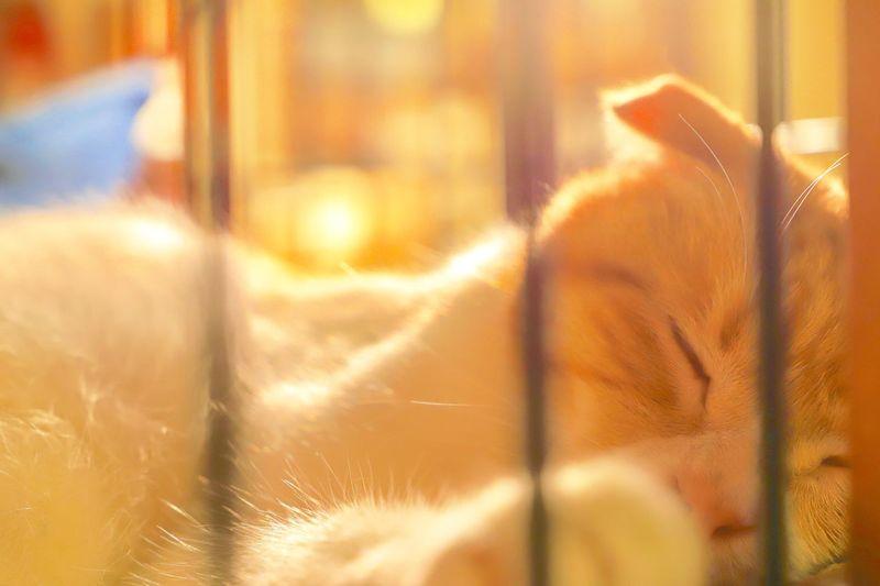 Sleeping cat In